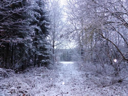 Hau_im_Schnee2