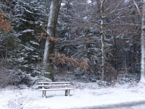 Hau_im_Schnee4