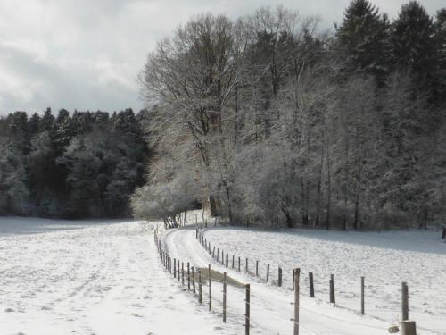 Hau_im_Schnee6