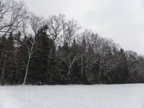 Hau_im_Schnee8